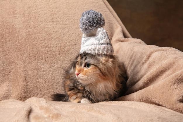 Zimowy nastrój. śliczny kociak kota syberyjskiego siedzący na sofie przykryty brązowym kocem.