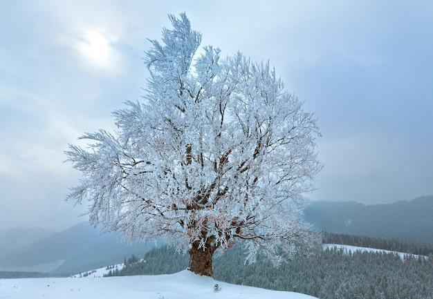 Zimowy, nudny, spokojny górski krajobraz z ośnieżonymi drzewami na wzgórzu i słońcem przez chmury