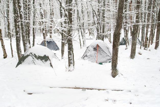 Zimowy obóz namiotowy w śnieżnym lesie