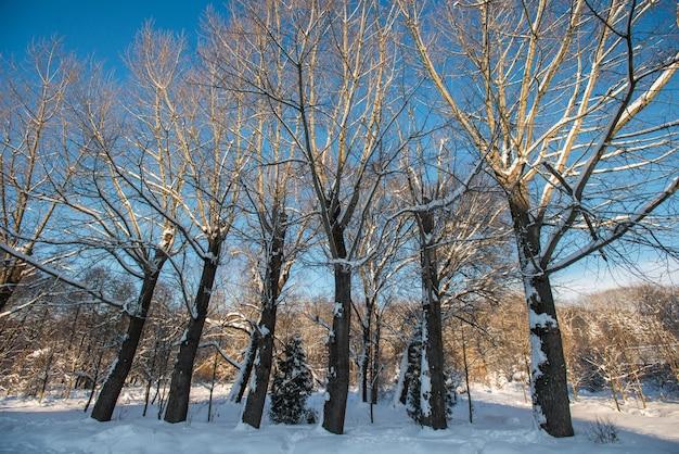 Zimowy park w godzinach porannych