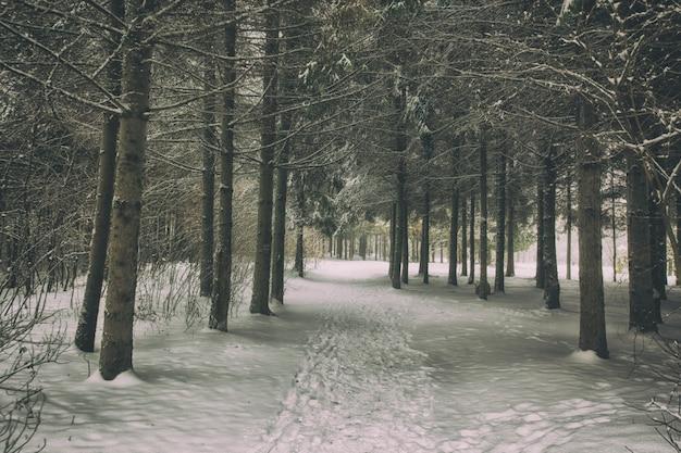 Zimowy park z drzewami pokrytymi śniegiem