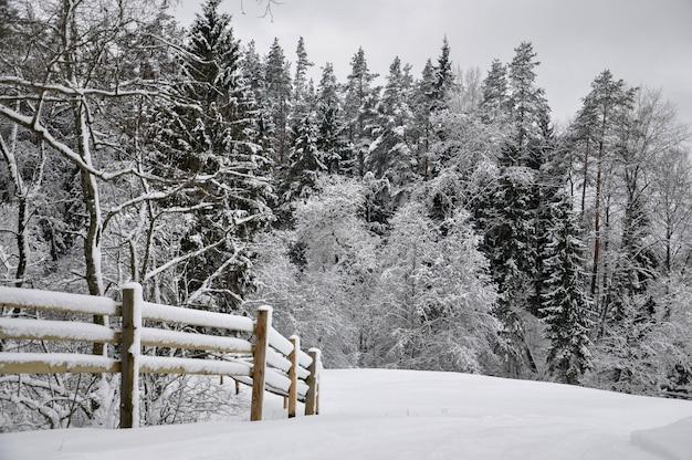 Zimowy pejzaż z śnieżnym lasem i drewnianym płotem.