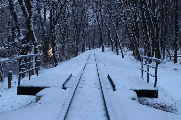 Zimowy pociąg w lesie