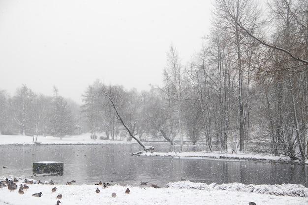 Zimowy śnieżny krajobraz przypominający park. zimowy krajobraz. obfite opady śniegu w parku. pierwszy śnieg.
