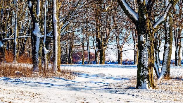 Zimowy śnieżny las w słoneczną pogodę