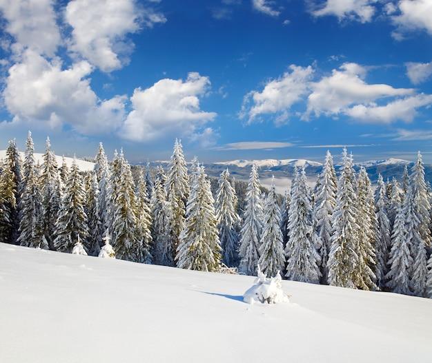 Zimowy, spokojny górski krajobraz z oszronionymi i ośnieżonymi świerkami (widok z ośrodka narciarskiego bukovel (ukraina) na grzbiet svydovets)