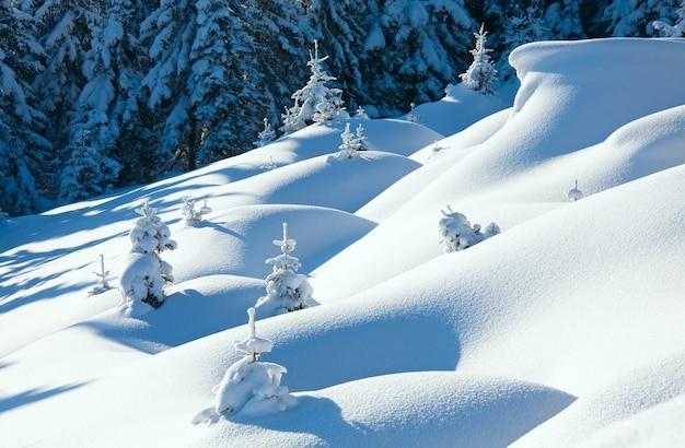Zimowy spokojny górski krajobraz z pięknymi jodłami na zboczu (góra kukol, karpaty, ukraina)