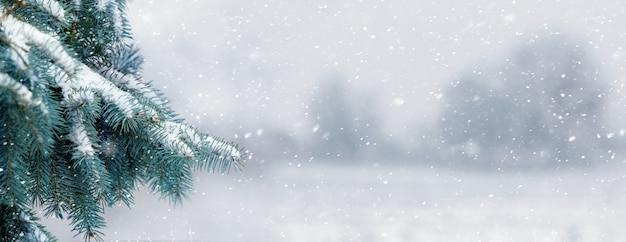 Zimowy widok z zaśnieżoną gałęzią świerku i rozmazanymi drzewami w oddali podczas opadów śniegu