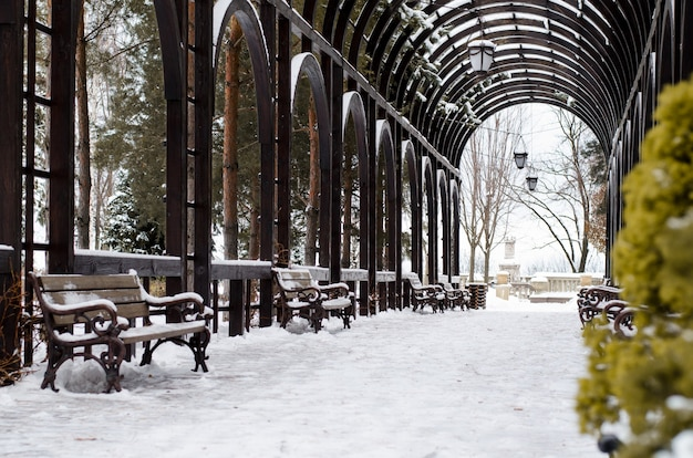 Zimozielona tuja z bliska rośnie w pergoli, przykryta galeria. park zimowy.