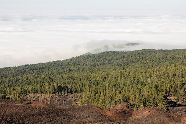 Zimozielony las z białymi chmurami