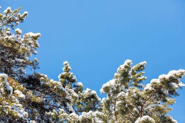 Zimy lasowa scena i niebieskie niebo