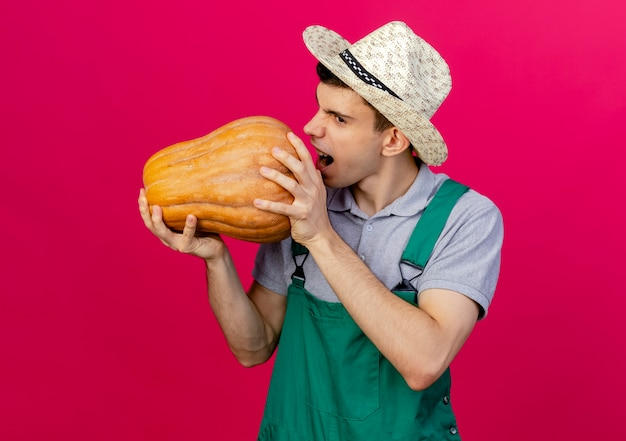 Zirytowany młody ogrodnik w kapeluszu ogrodniczym udaje, że gryzie dynię
