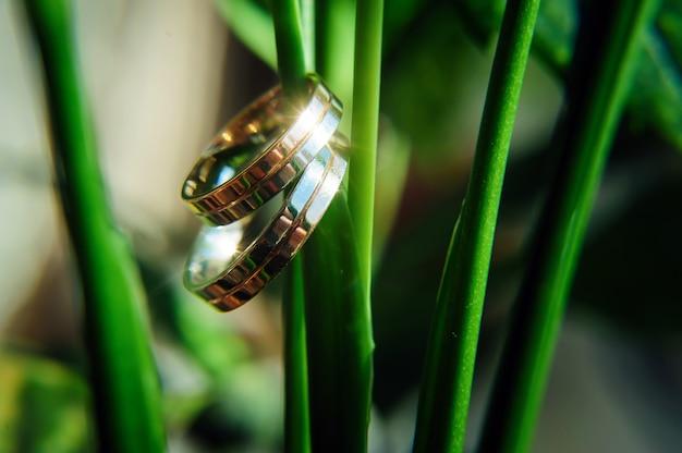Złociści pierścionki nowożeńcy na trzonie zielona roślina, zamykają up. ślub tło, miejsca na tekst. karta świąteczna