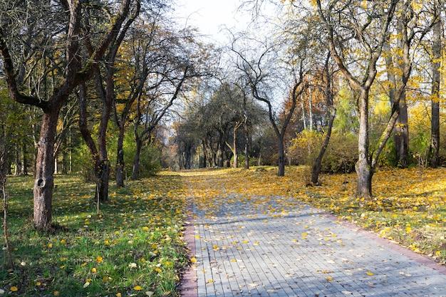 Złocista jesienna sceneria z ładnym drzewem, opadającymi liśćmi, czystym błękitnym niebem i ciepłym słońcem