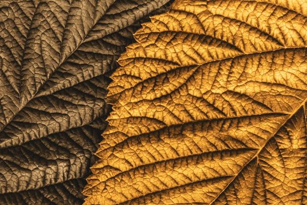 Złota i brązowa tekstura jesiennych liści