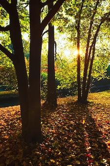 Złota jesień jesień październik w słynnym monachijskim miejscu relaksu englishgarten munchen bawaria niemcy