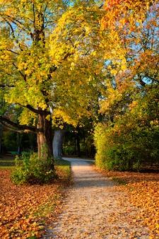 Złota jesień październik w słynnym monachijskim miejscu wypoczynku - englishgarten. munchen, bawaria, niemcy