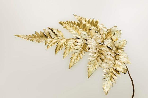Złota paproć skórzasta na białym tle