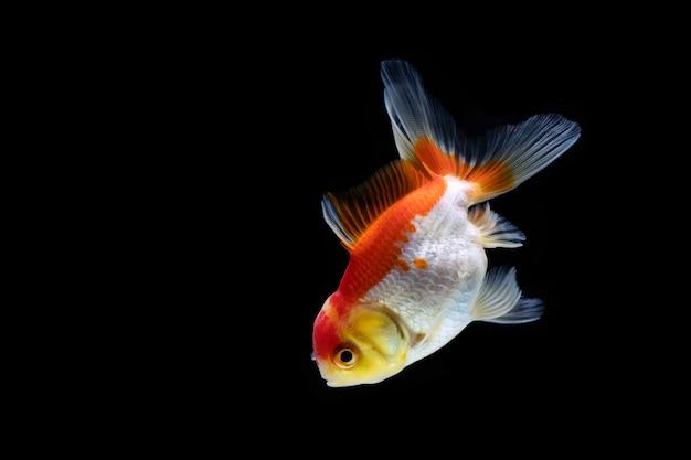 Złota rybka w ciemności