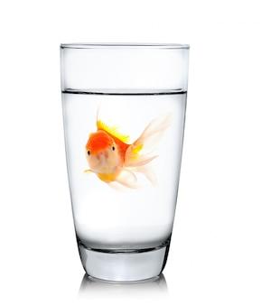 Złotą rybkę w szklance do picia