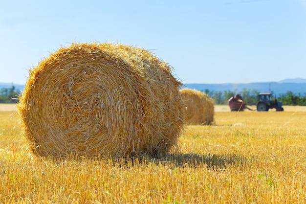 Złote bele siana na wsi