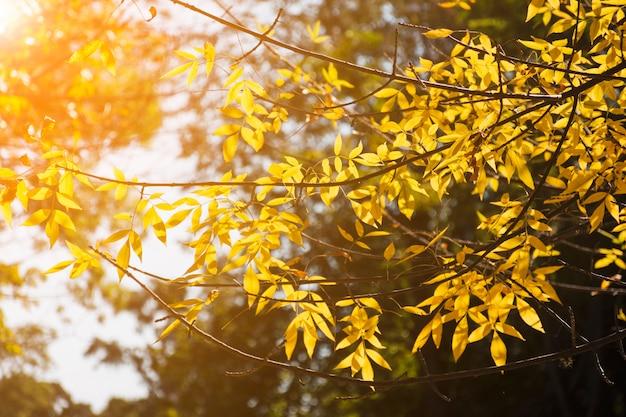 Złote gałęzie w jesiennym świetle słonecznym