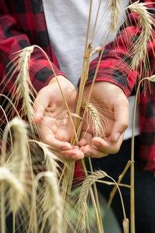 Złote kłosy dojrzałej pszenicy w rękach młodych rolników