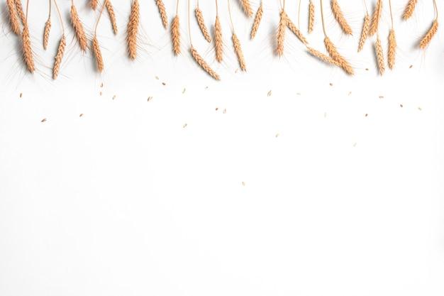 Złote kłosy pszenicy i żyta, suche kłoski zbóż na lekkiej ścianie