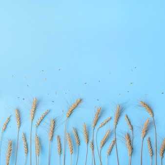 Złote kłosy pszenicy i żyta, suche kłoski zbóż w rzędzie na świetle