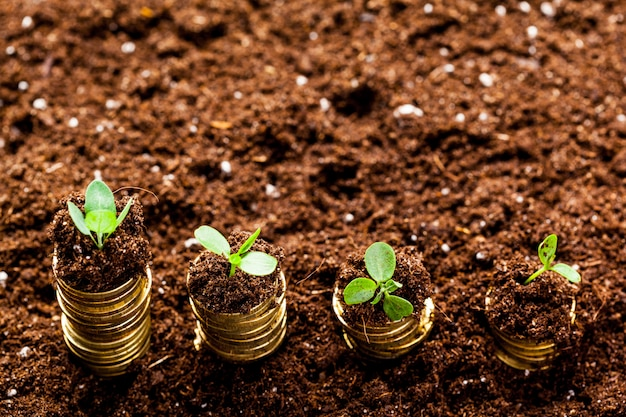 Złote monety w glebie z młodą rośliną, koncepcja wzrostu pieniędzy,