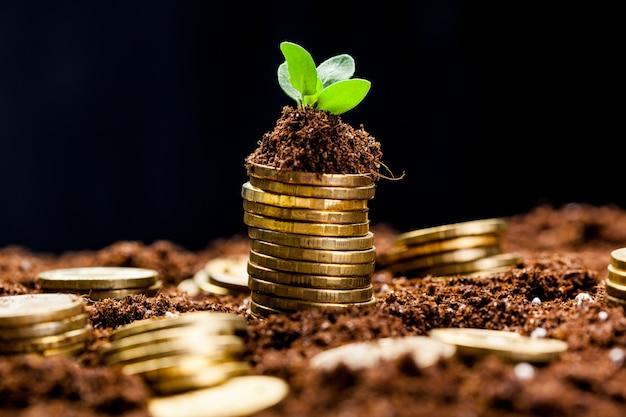 Złote monety w ziemi z młodą rośliną. koncepcja wzrostu pieniądza.