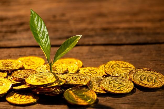 Złote monety z młodą rośliną. koncepcja wzrostu wzrostu pieniądza.