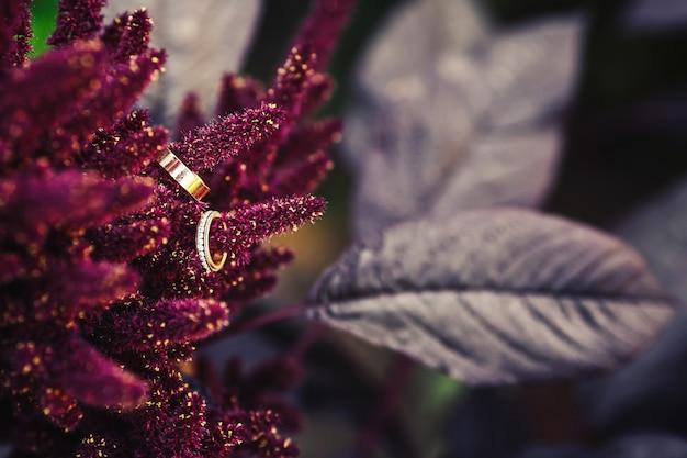 Złote obrączki ślubne na kwiatach amarantusa