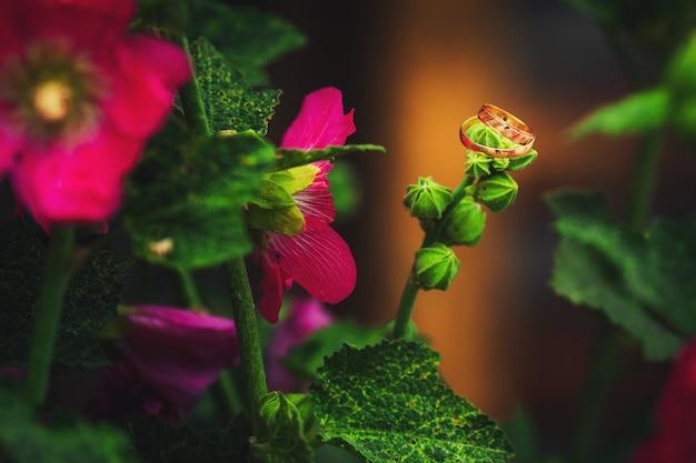 Złote obrączki ślubne na kwiatach