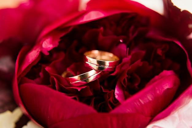 Złote obrączki ślubne, z bliska.