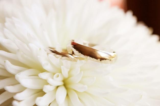 Złote pierścienie na białym delikatnym kwiecie chryzantemy, kompozycja kwiatowa ślubu, detale ślubne