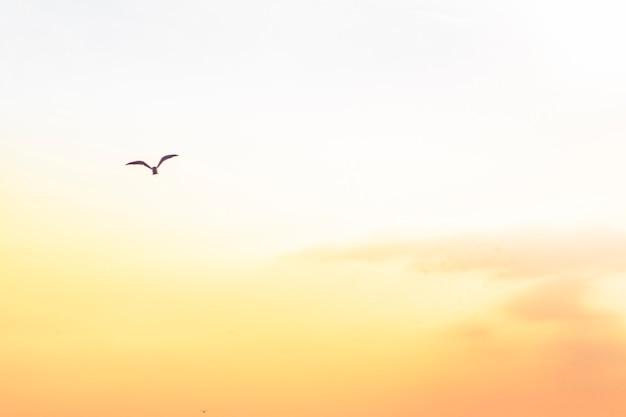 Złote pomarańczowe niebo o zachodzie słońca i latające ptaki