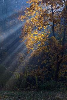 Złote promienie słońca przenikają przez drzewa w mglisty jesienny poranek