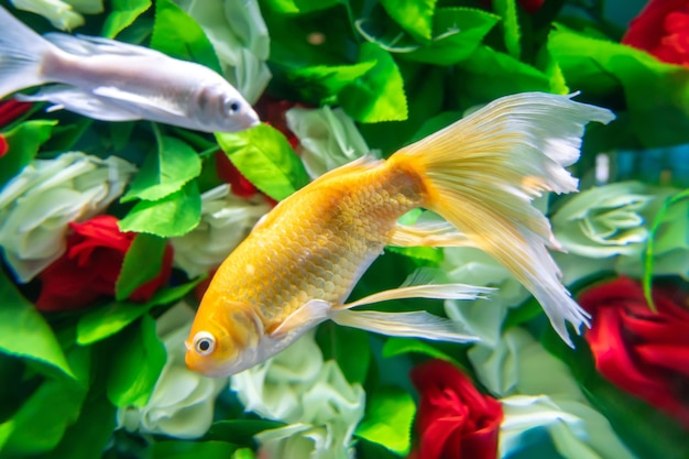 Złote rybki pływają wśród kwiatów pod wodą