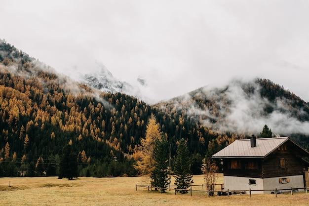 Złote skowronki w szwajcarii, engadin