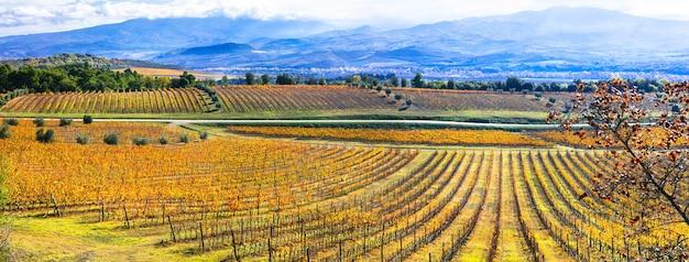 Złote winnice. piękne pola winogron w jesiennych barwach. toskania, włochy