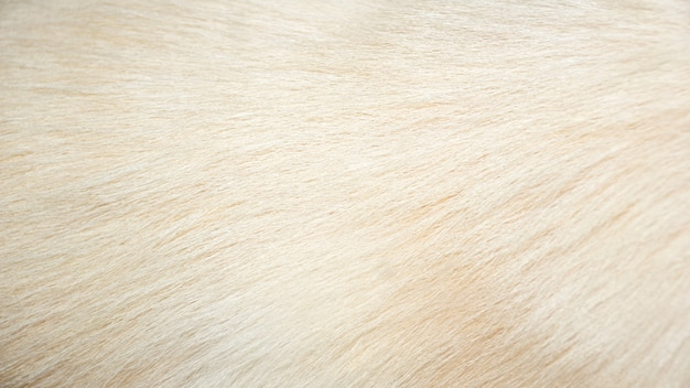 Złote włosy psa na tle.
