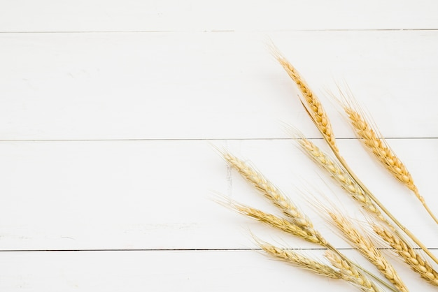 Złotego koloru pszeniczny ucho przed białą drewnianą ścianą