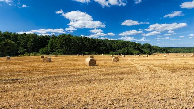 Złotopomarańczowa słoma po zbiorach pszenicy, pole rolnicze, na którym słomę pszenną zbiera się w stosy do wykorzystania w rolnictwie i hodowli zwierząt