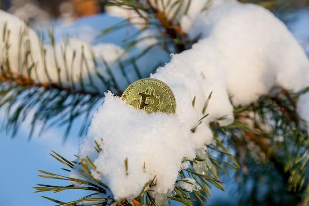 Złoty bitcoin na gałęzi jodły na tle śniegu.