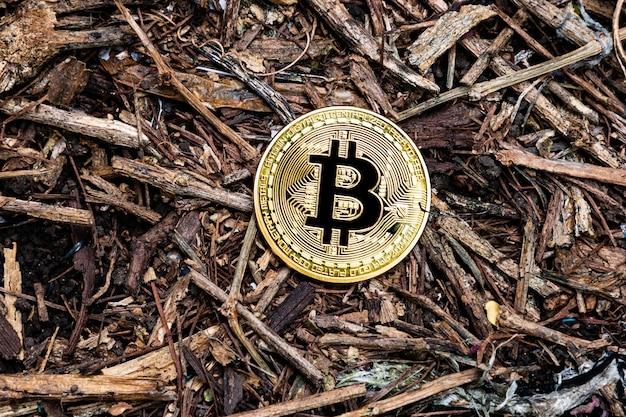 Złoty bitcoin na ziemi po środku lasu