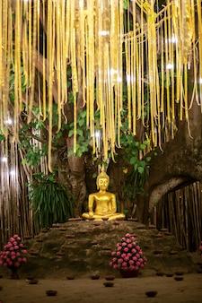 Złoty budda pod drzewem bodhi wśród latarni w świątyni phan tao