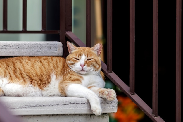 Złoty kot leżący na marmurowych schodach w poszukiwaniu chłodu