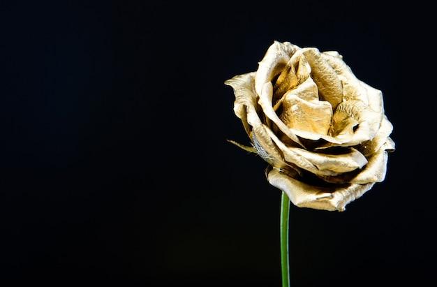 Złoty kwiat na czarnym tle. wystrój kwiaciarni. naturalne piękno. złota róża. luksus i sukces. metalizowany wystrój. koncepcja antyczna. bogactwo i bogactwo. florystyka. zabytkowe. miejsce na kopię.