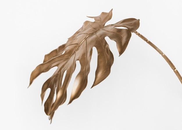 Złoty liść monstera na białym tle